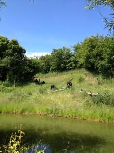 Där någonstans i gräset sitter gorillor.