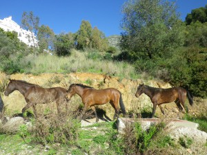 Rose-Marie bloggar från Marbella om den förtjusande bergsbyn Istán