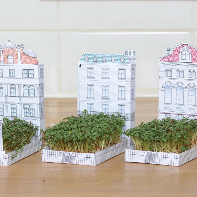 Tips för dig som vill odla men inte har en trädgård