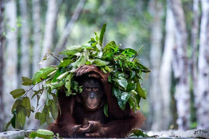 Inlärning gör djur intelligenta – ny forskning om effektiva beteenden